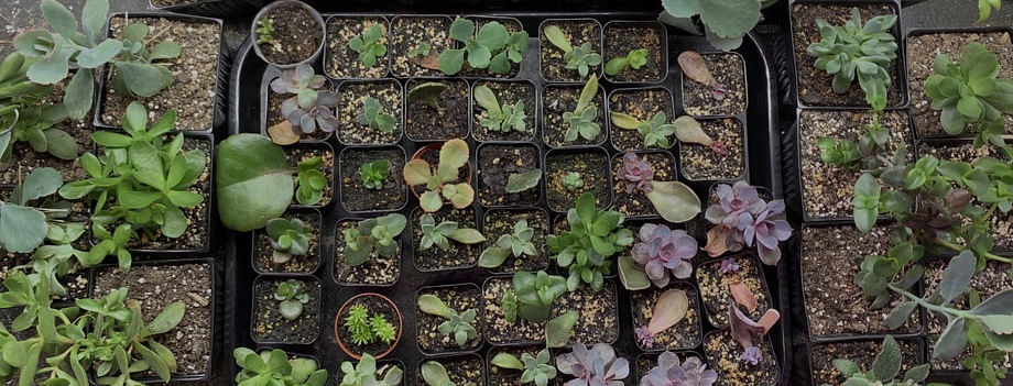 The Free Succulent Project